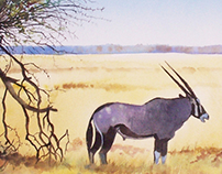 Gemsbok - Watercolor on paper