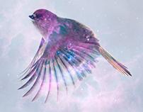 Space sparrow