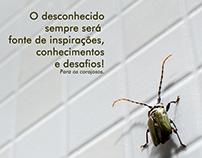 Redes Sociais - Airton Rocha