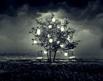 The Still Lives of Trees