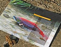 Alaska: Travel Brochure