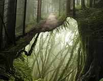 UNDER FOREST