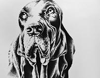 Drawings - Hyperrealism