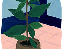 Plant in Corner - Commission Illustration