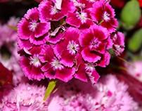 Flowers & Cereals