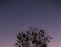 nightly lens test