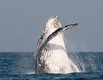 Whale behavior research