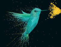 Limited Edition 'Hummingbird' Art Prints