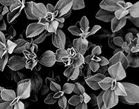 Folhas cadentes