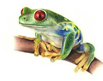 Multicolored Frog