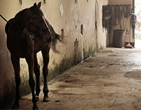 _Horse lover.