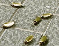 Cockroach Jewells