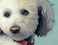 Pet Portrait - Jack
