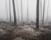 In the Fog II