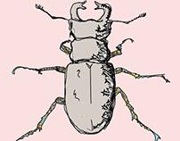 Beetle Study