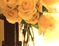 Roses- Photography