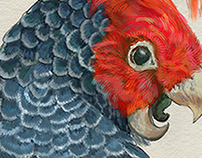 Australian animas illustration contest