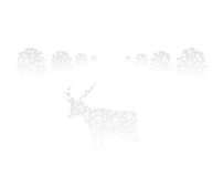 Suzuki / Deer