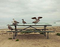 Birds, Jalama Beach, California