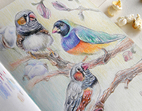 Spring mood finches
