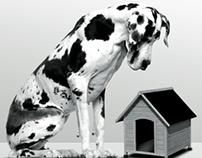 Banner Danish dog