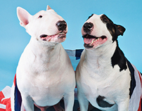 DOGS: Bull terrier - sweet bulls