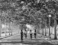 Bicycles and trees.