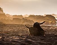 Pichilemu Landscape 2013