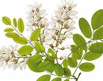 Digitally Painted Botanical Illustrations