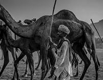 Camels Driver