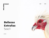 Rolando Angulo Website