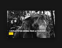 L'exploitation animal pour le tourisme – Fake-News