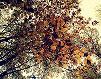 Last days of October