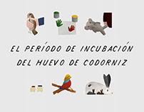 """""""El período de incubación del huevo de codorniz"""""""