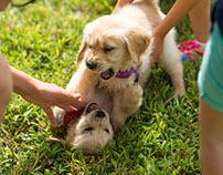 Puppy Goki.Cai