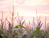 Die Wunderbarste im Maisfeld