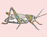 Grasshopper Study