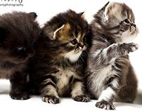 Kittens 08-01-2013