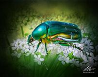 Green Beetle Digital Oil Painting by Wayne Flint