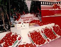 1rst Branded Tomato in Greece - PRIMA