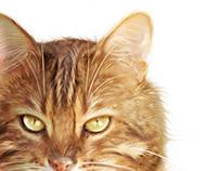 Promotion - produit vétérinaire (pour Ozalid design)