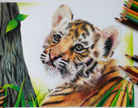 Drawing of a Cub