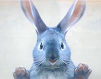 Blue Bunny - pitch video