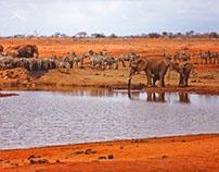 Tsavo East / Kenya