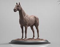 equine anatomy (horse)