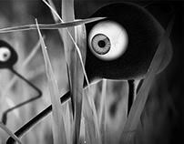 Personal: Grass birds