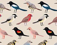 Birds of Southern Alberta