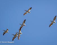 Migratory Birds Arrive!