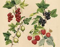 Yasnaya Polyana Plants
