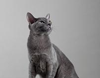 I,Pet: KYLIE